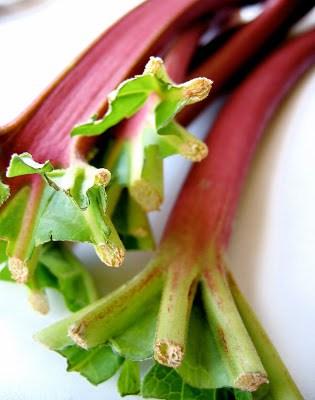 close up of rhubarb