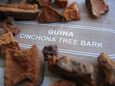 close up of cinchona tree bark
