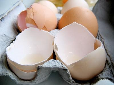 egg shells in a carton