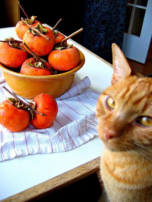 cat posing with persimmons