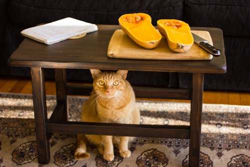 cat under table