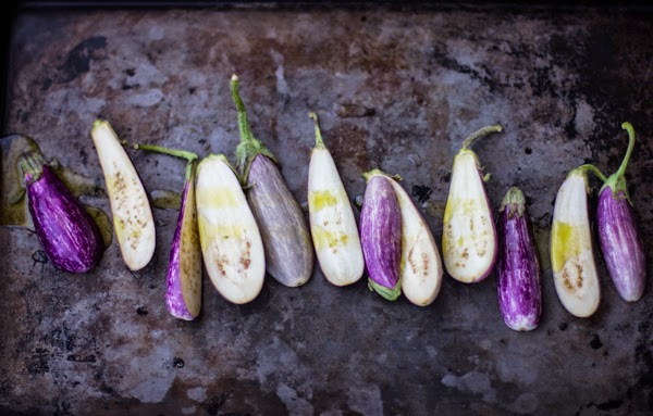 row of eggplants