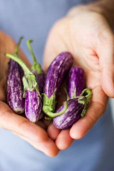 hands holding eggplants