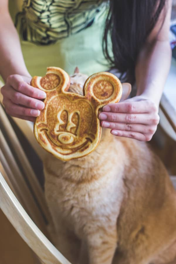 cat with mickey mouse toast