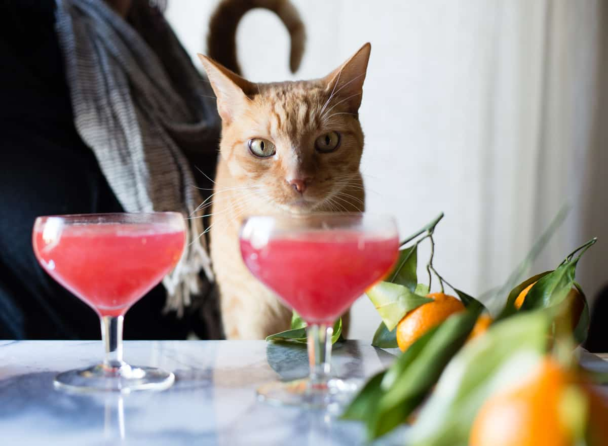 cat and Sparkling Citrus, Lillet & Prosecco Punch