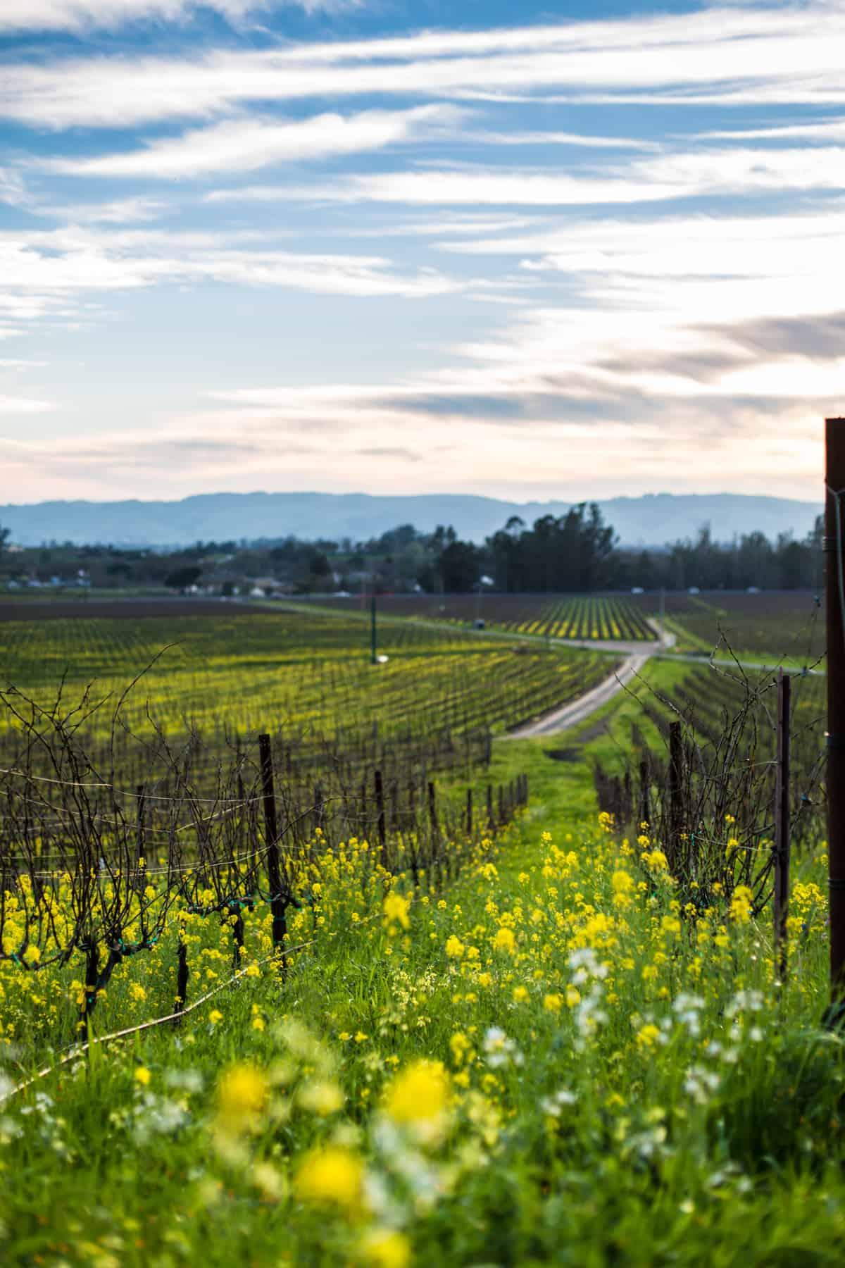 Sonoma County daytime