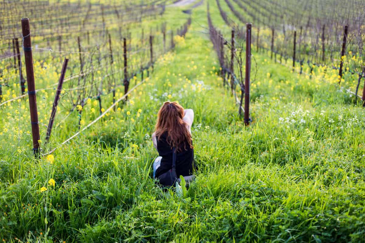 Sonoma County field