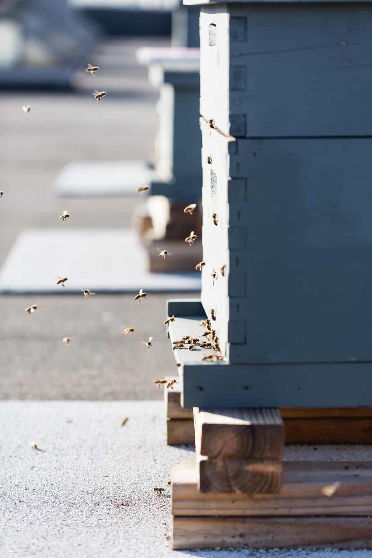 Rooftop beehive in San Francisco