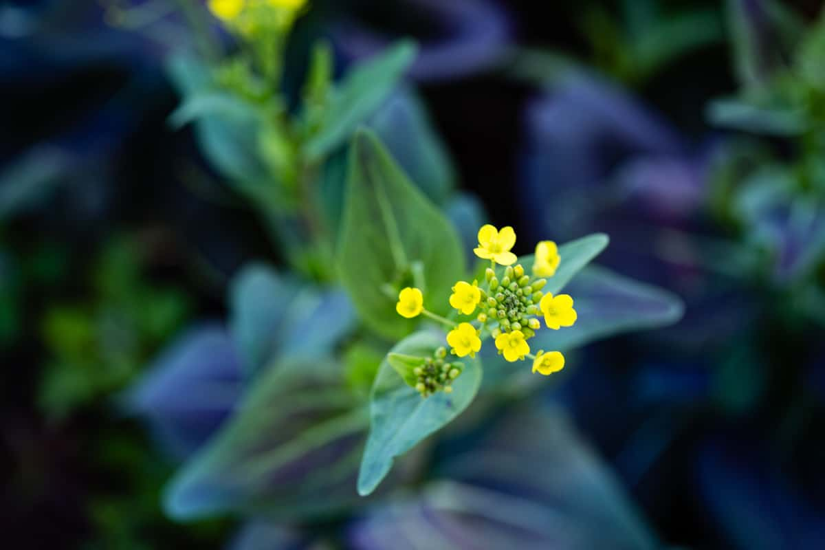 flowers umbleweed Farm